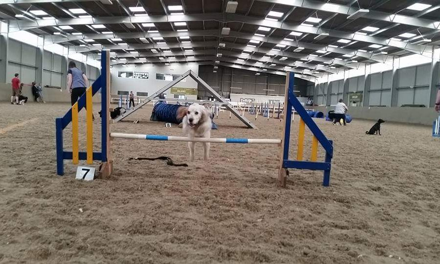 Tails and Peaks Agility and Dog Training Derbyshire on Inter Search